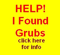 Help! I found Grubs on my Lawn