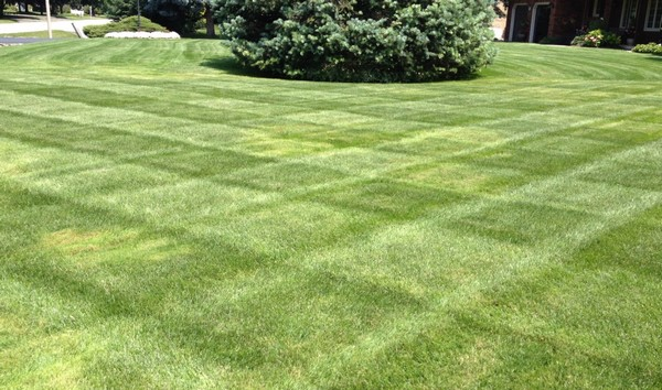 Mowing Stripes Can Enhance a Lawn's Looks
