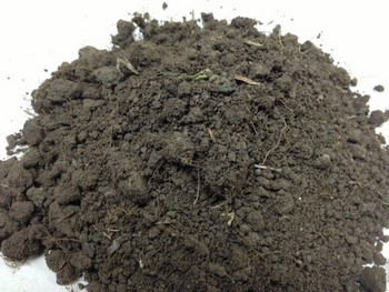Soil Test Helps Lawn Care by Turf King