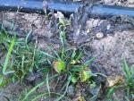 Weeds - What Can Be Done?