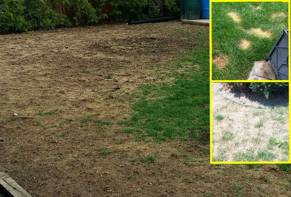 Damaged Lawns